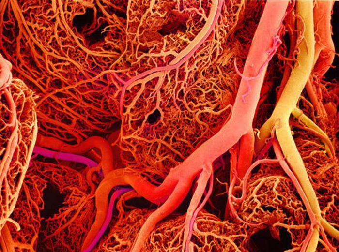 показывает холестерин в крови