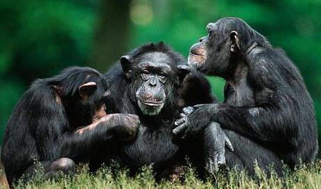 Животные превосходно общаются между собой