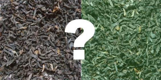 Чем зеленый чай отличается от черного