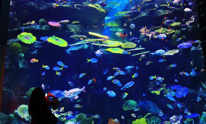 Океанариум в бангкоке как добраться