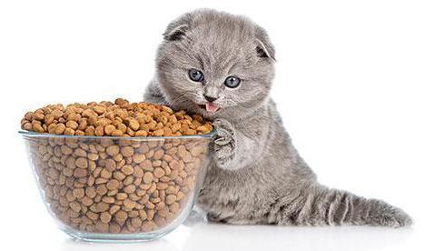 вреден ли сухой корм для кошек и котят