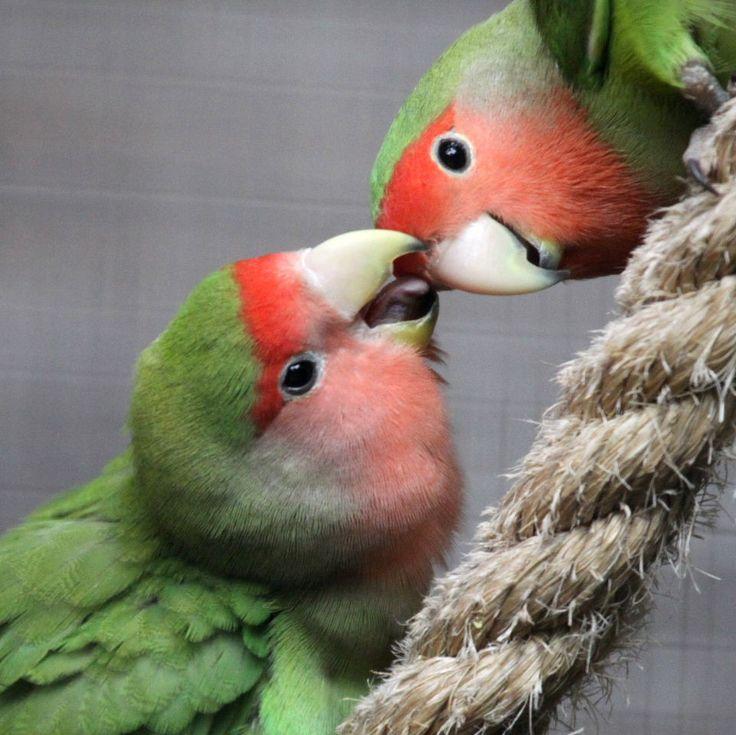 Сколько живут попугаи 24
