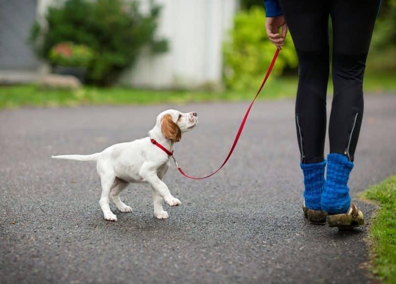 Прогулки со щенком