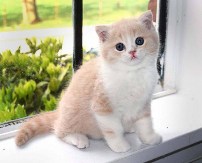 Чем кормить 15 месячного котенка