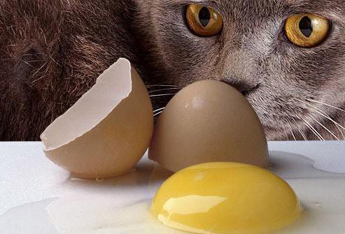 Чем кормить котят 15 месяца