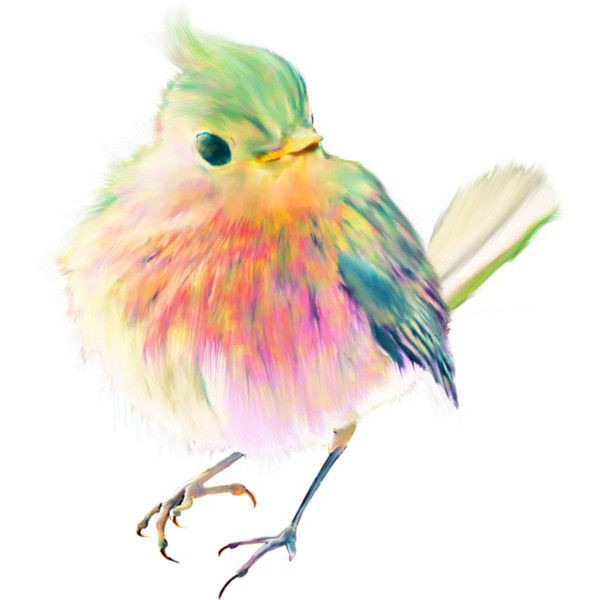 Draw and paint birds in watercolor