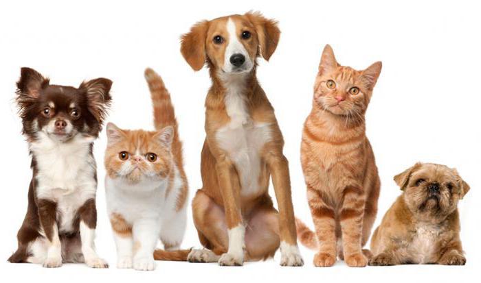 мероприятие ко дню домашних животных