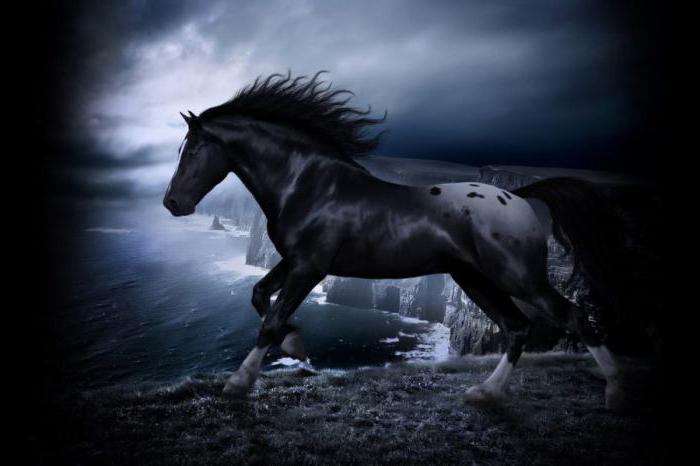 темная лошадка значение фразеологизма