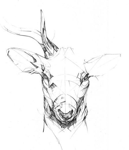 How To Draw A Deer Head Pencil