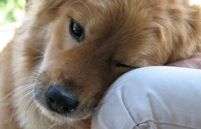 спасти собаку во сне