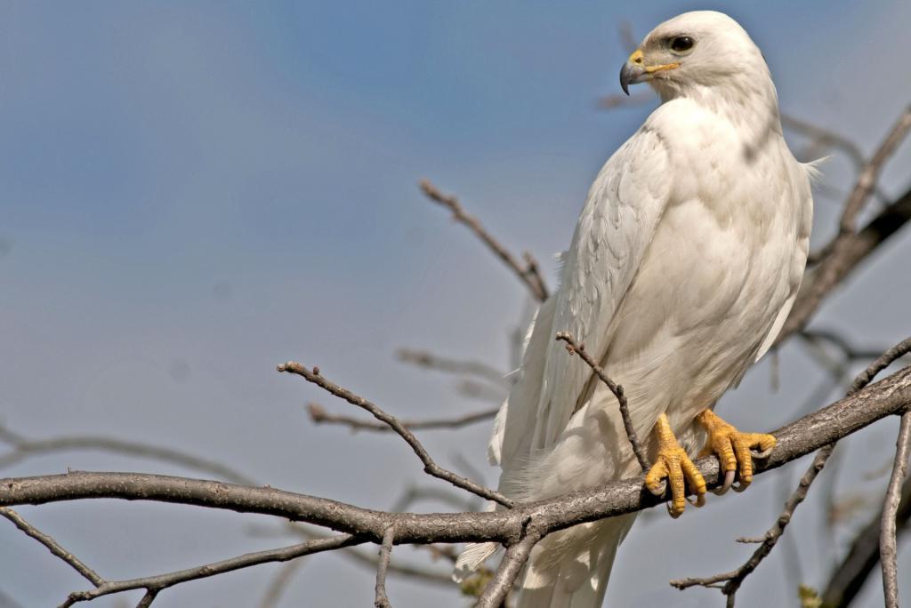 к чему снятся белые птицы в доме