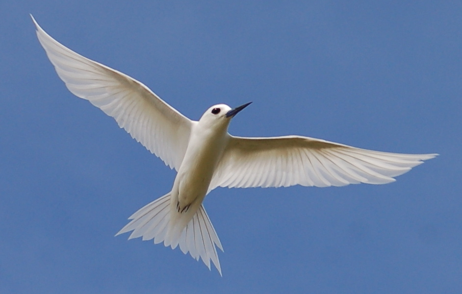 белая птица женщине