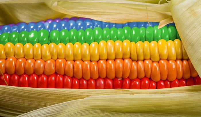Можно ли кукурузу вареную при беременности