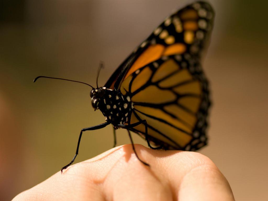 К чему снится большая бабочка, которая вас пугает – вы можете осознать свою незначительность.