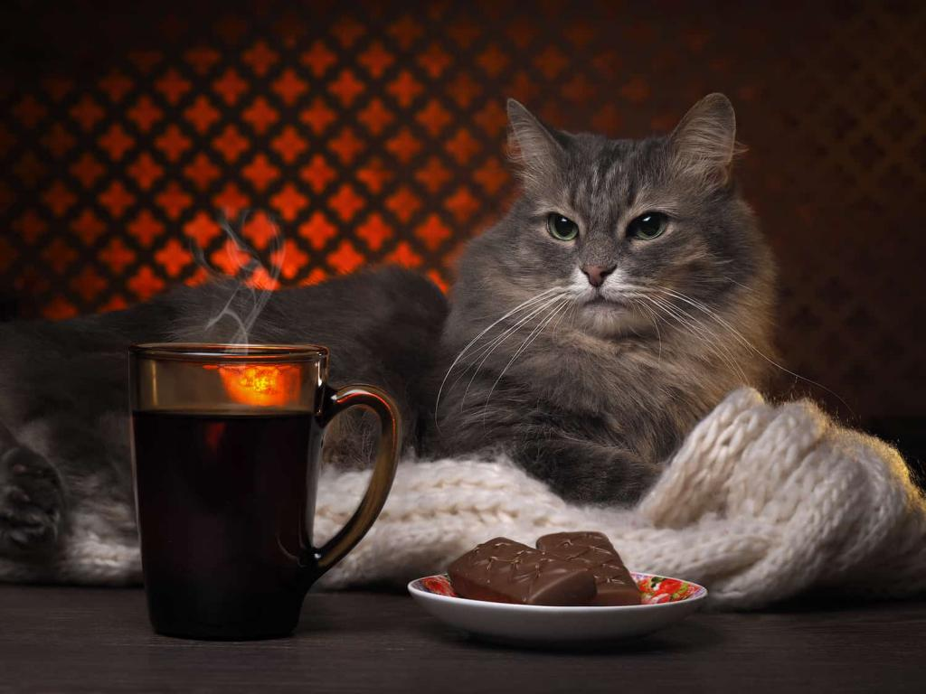 картинки с котами и чаем и мы не подкачаем звезды