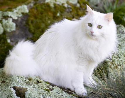 какой набор хромосом имеет яйцеклетка кошки