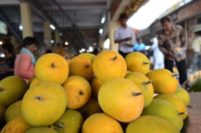 Фрукт манго – польза и вред