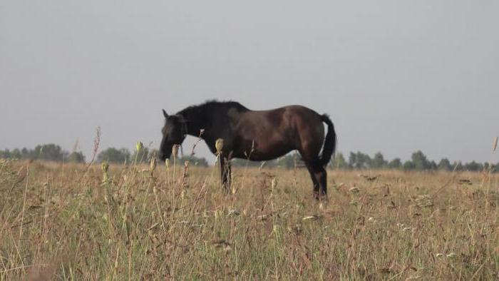 http://fb.ru/misc/i/gallery/56942/2204370.jpg