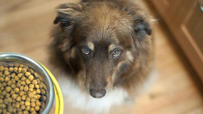 как давать собаке таблетки от глистов каниверм