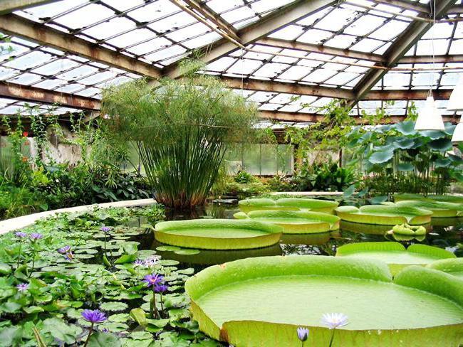 Картинки по запросу ростов на дону Ботанический сад ЮФУ