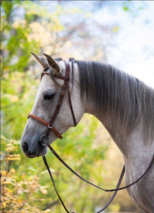 character of the terek horse breed