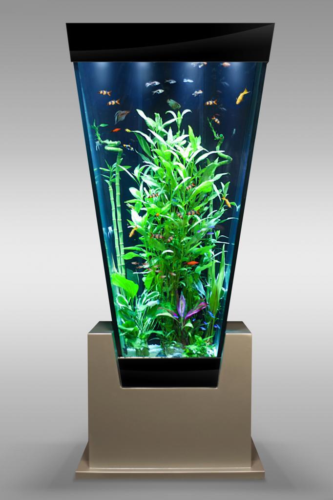 фото узких аквариумов кчр-информ