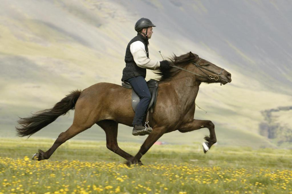 картинки с лошадьми и всадниками увидела его пляже