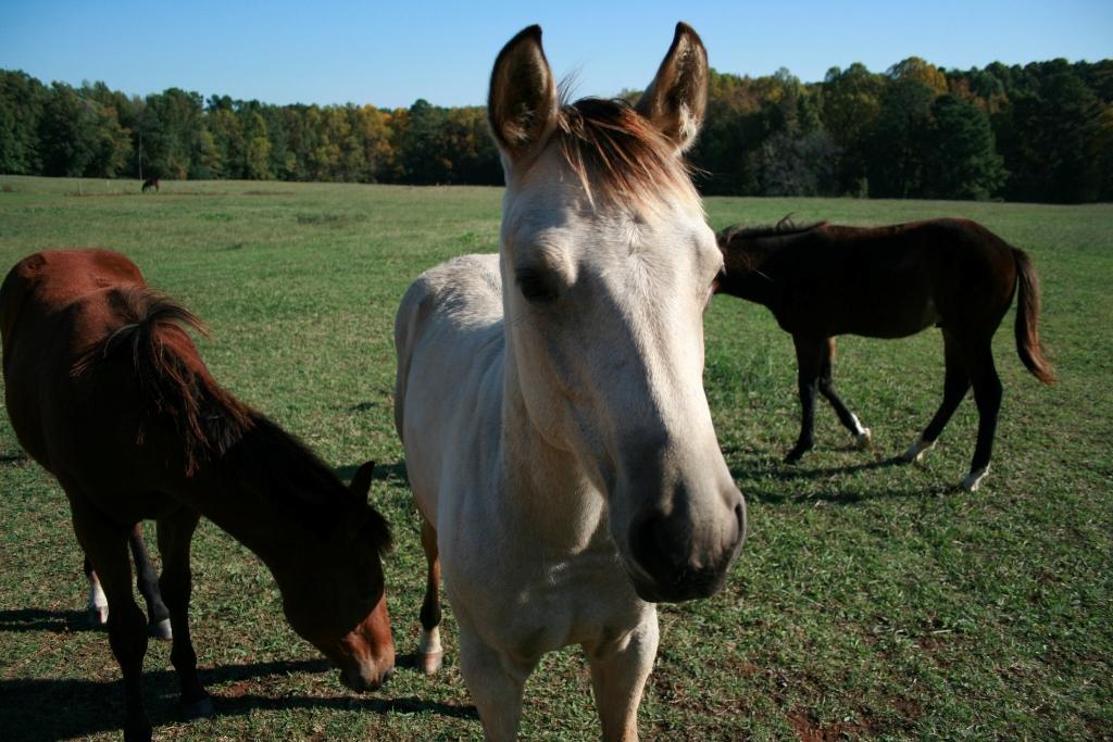 фото спарка коней что