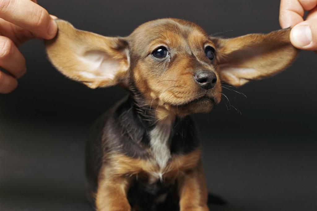 Royal Canin Mini Adult 8+ 0. 8 кг – купить корм для собак