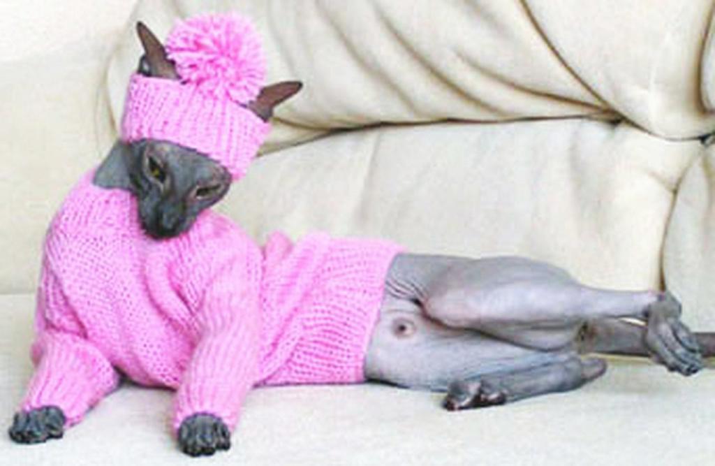 Кошка-сфинкс в вязаном свитере