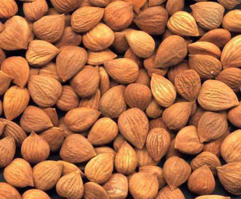эффективность лечения рака абрикосовыми косточками