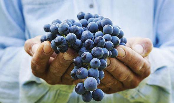 полезно ли есть виноград с косточкой