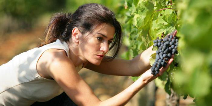 какой виноград полезнее