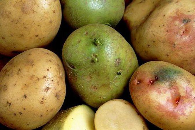 сырой картофель с кефиром польза и вред