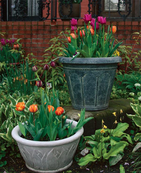 Сажать тюльпаны в доме 59