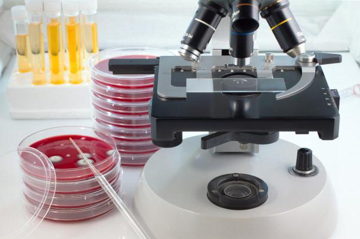 urine culture on microflora