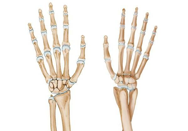 шиловидный отросток лучевой кости