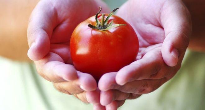 томат в свежем виде