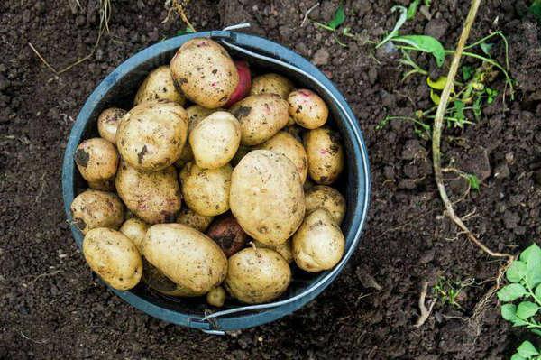 2 оргазма за мешок картошки