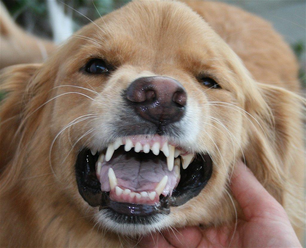 Картинки зубов животных