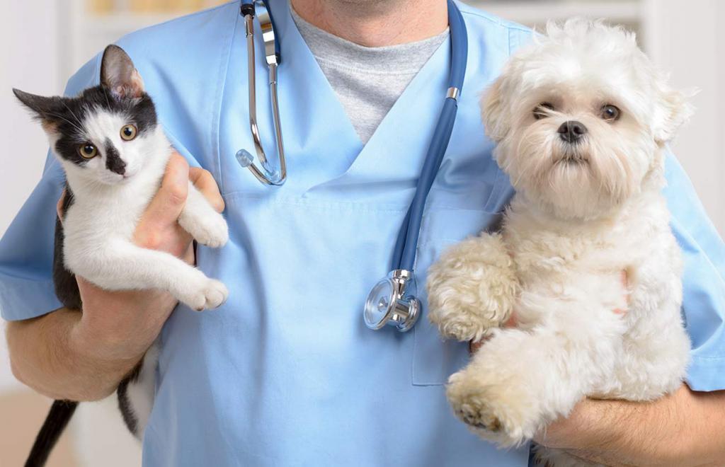 считают, что ветеринары картинки животные отдыхающее без