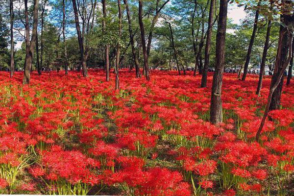 осень в японии фото