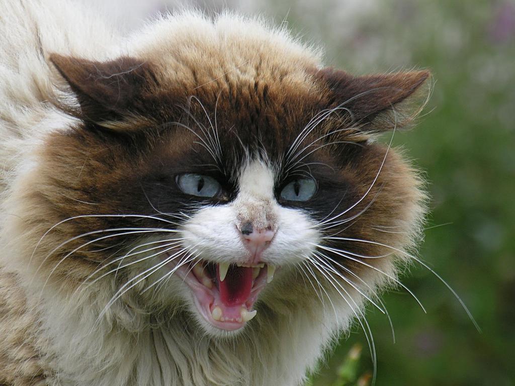 Что значат коты по сонникам и как понять значение сновидения картинки