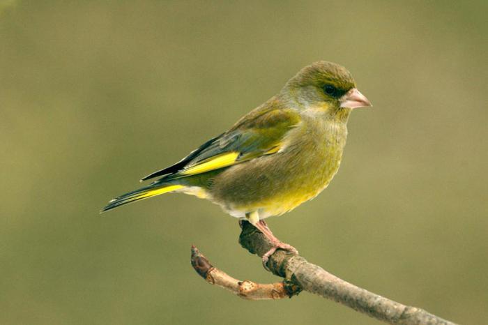 какие птицы весной прилетают первыми
