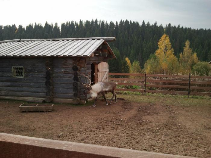 село хохловка пермский край