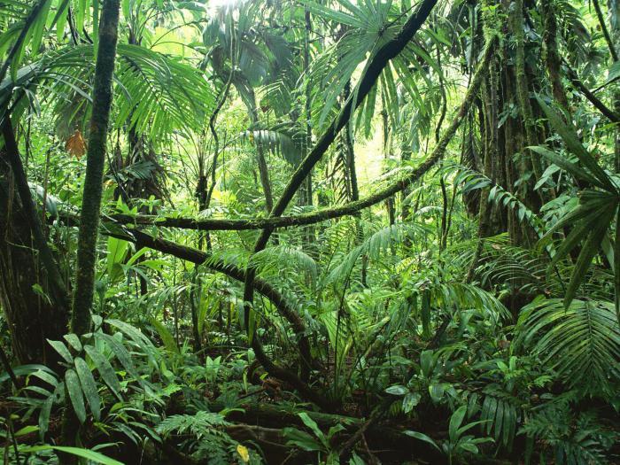 влажно экваториальные леса растени
