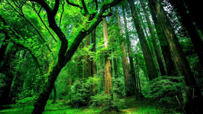 растения экваториальных лесов
