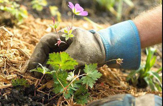опилки для огорода польза и вред