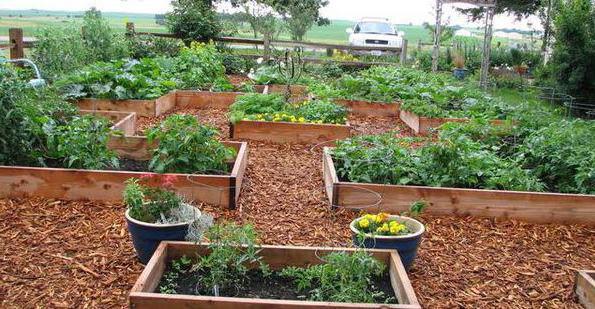 свежие опилки на огороде польза или вред