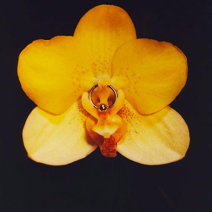 Поза «Орхидея»
